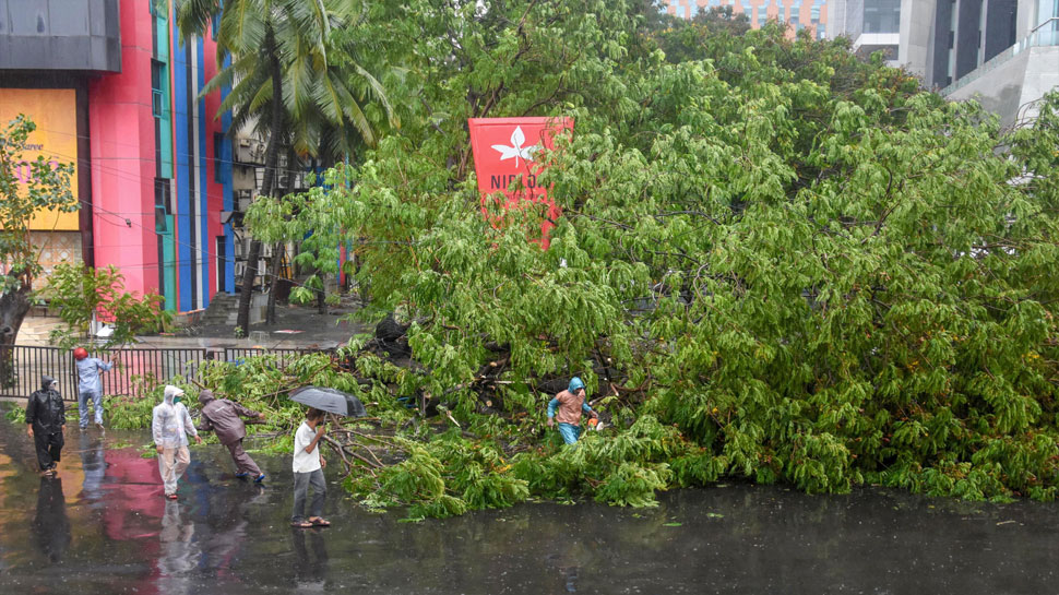 A fallen tree on the Western Express highway in Mumbai