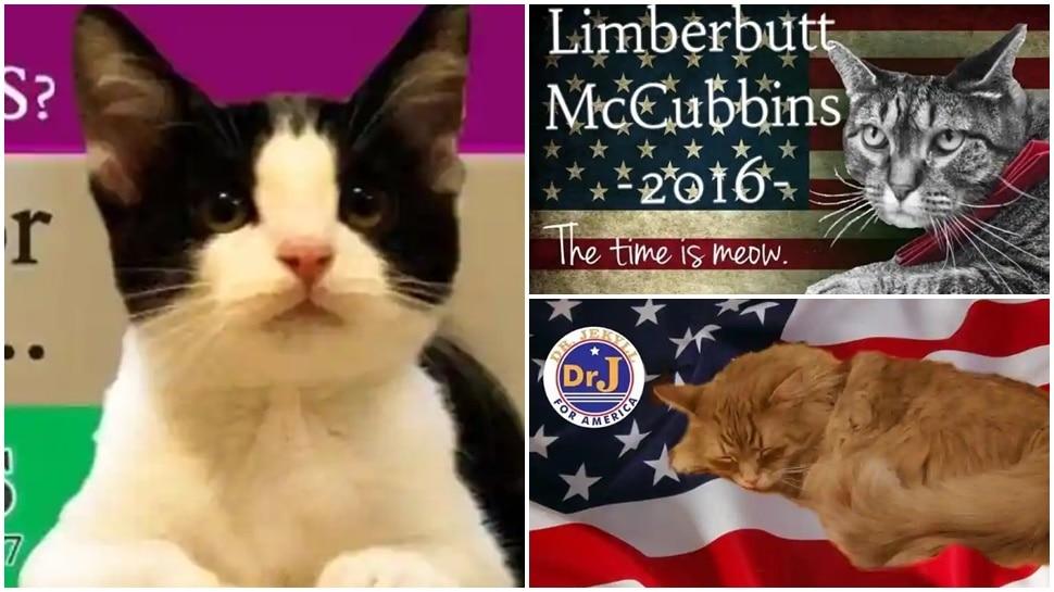 ये हैं दुनिया की मशहूर बिल्लियां, अमेरिकी चुनावों में भी ले चुकी हैं हिस्सा