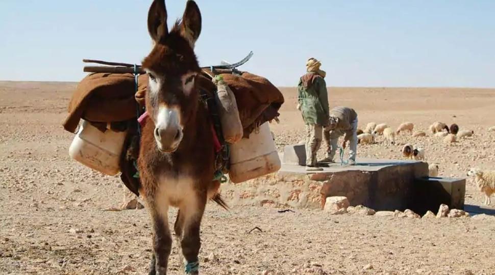 Donkey Dairy Farm: ୧ ଲିଟର ଗଧି କ୍ଷୀରର ଦାମ ୭୦୦୦, ଜାଣନ୍ତୁ ଏହାର ଫାଇଦା...