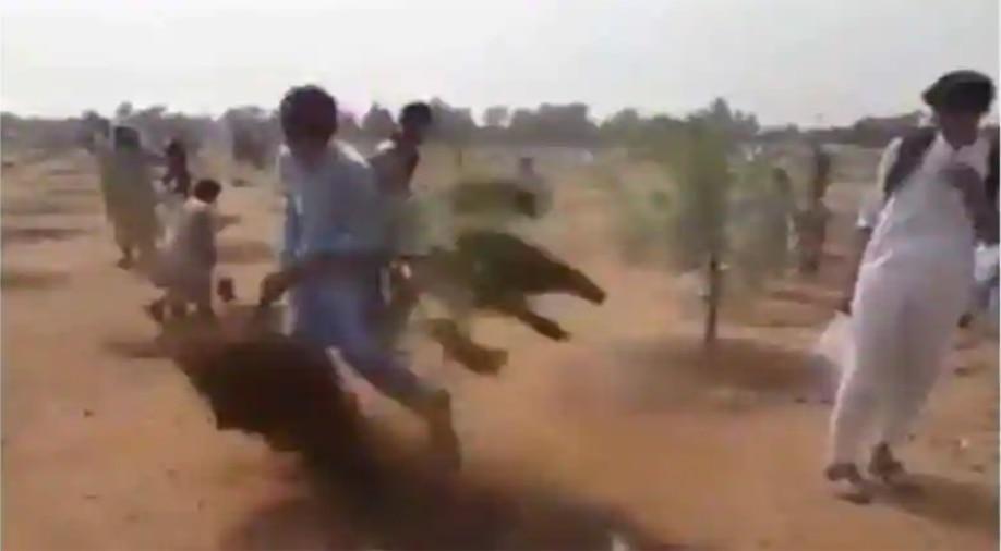 क्या पेड़ लगाना इस्लाम विरोधी है? जानें वायरल हो रहे पाकिस्तानी वीडियो का पूरा सच