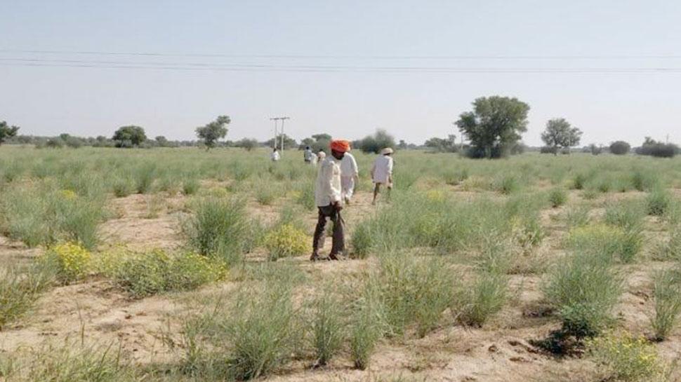 जैसलमेर: ओरण भूमि को लेकर ग्रामीणों ने शुरू की परिक्रमा, बताई यह बड़ी वजह...