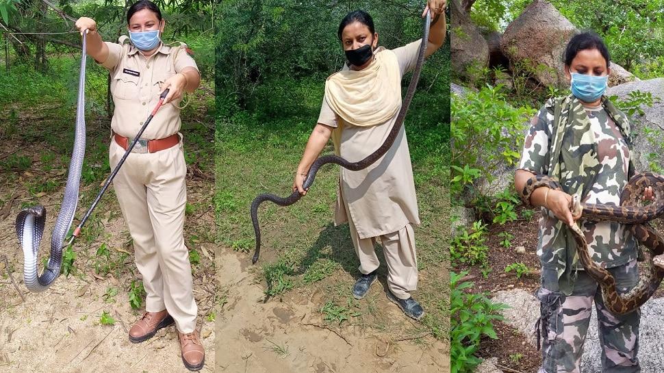 Rajasthan Snake Lady: चुटकियों में जहरीले सांपों को काबू कर लेती है अंजू
