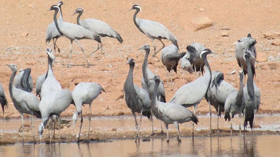 6000 किलोमीटर दूर से उड़कर भारत पहुंचे ये विदेशी पक्षी, यहां हैं कुछ खास तालाब