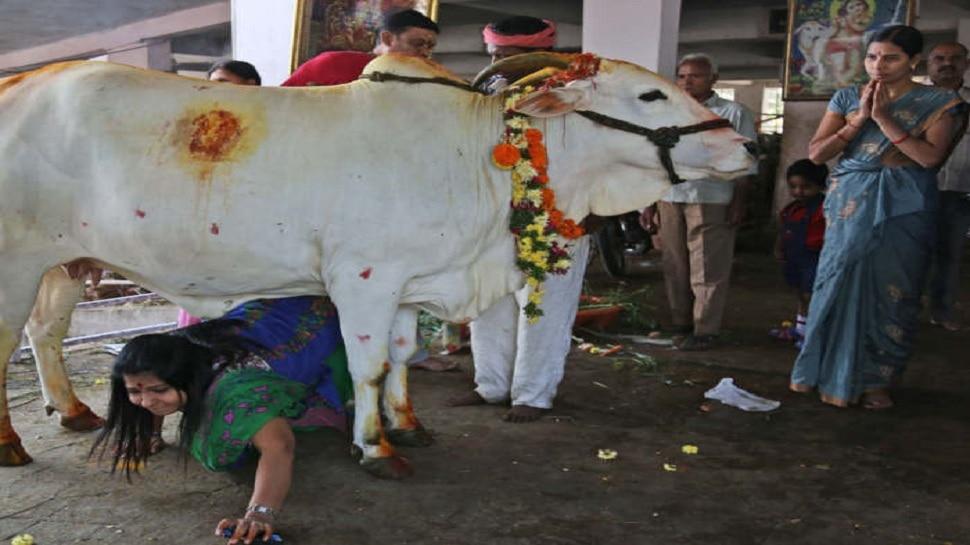 Gopashtami: इस शुभ मौके पर करें गाय, गुरु और गोविंद की पूजा, बरसेगी कृपा