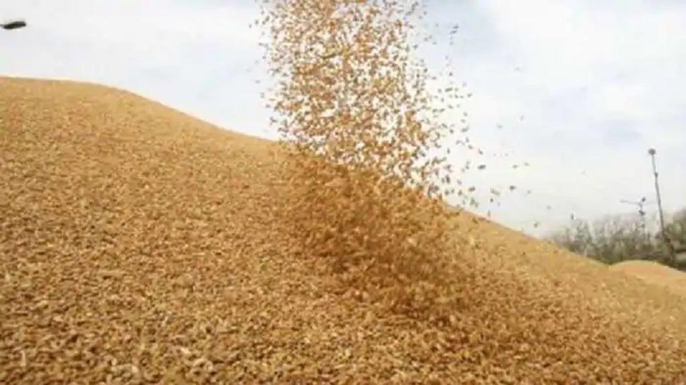 किसान आंदोलन के बीच RTI में गेहूं-धान खरीद को लेकर हुआ बड़ा खुलासा