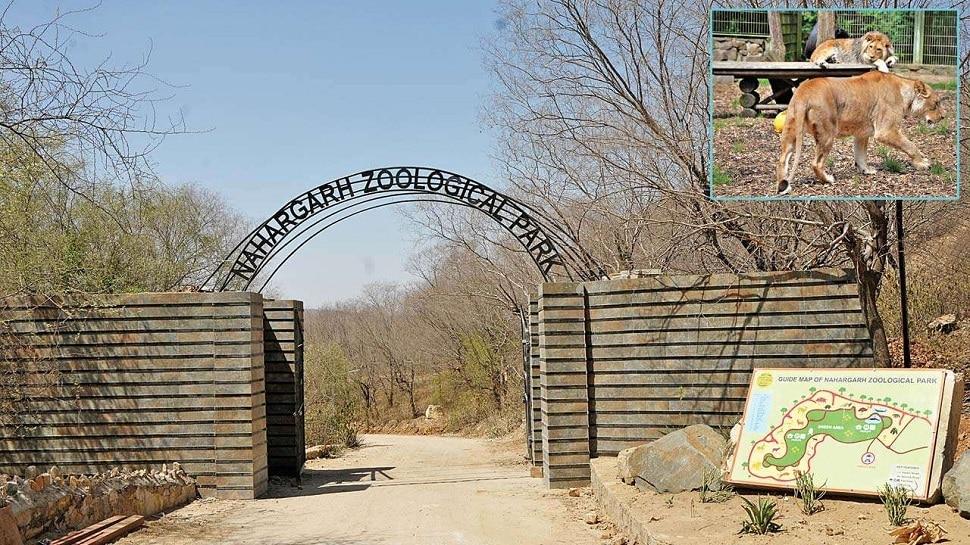 Rajasthan में ठंड का प्रकोप, वन्यजीवों के एंक्लोजर में लगाए गए Heater