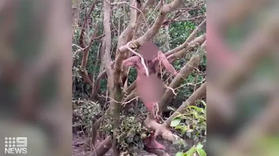 ऑस्ट्रेलिया में मगरमच्छ से भरे पानी के ऊपर टहनी पर बैठा मिला Nude आदमी, घोंघे खाकर रहा जिंदा