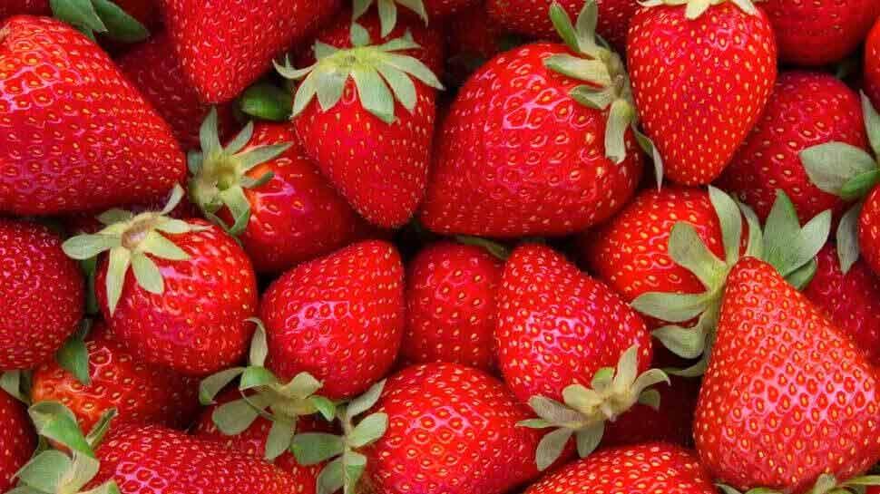New identity! Jhansi की नई पहचान बनेगी Strawberries की खेती, जानिए रोडमैप