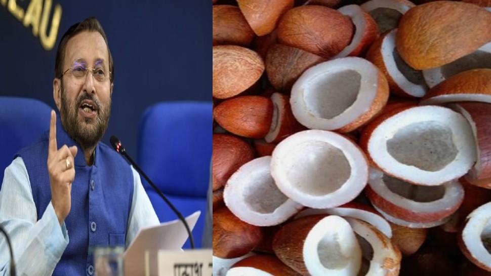 Cabinet: नारियल के किसानों को अब मिलेगी ज्यादा कीमत, सरकार ने 375 रुपये बढ़ाई MSP