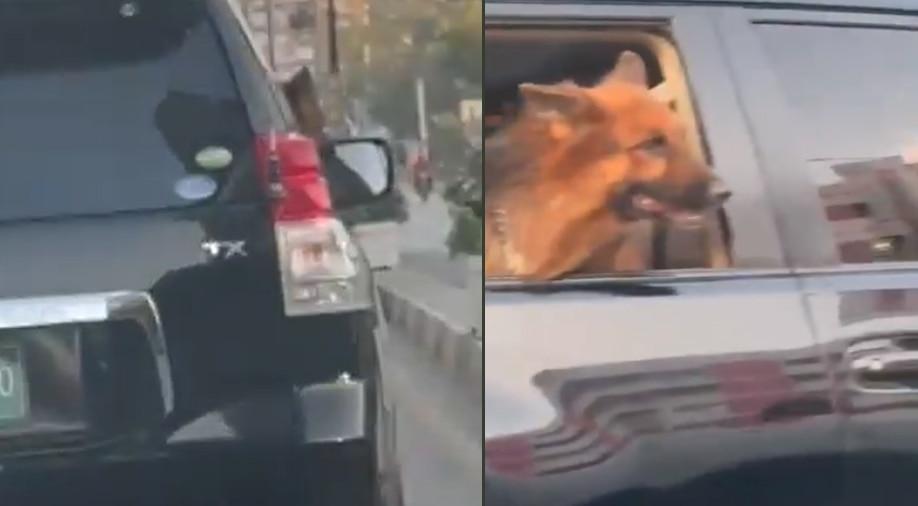 बदहाल Pakistan में जनता के पैसों की बर्बादी, VVIP सुरक्षा में घूमने निकला Imran Khan के करीबी का कुत्ता