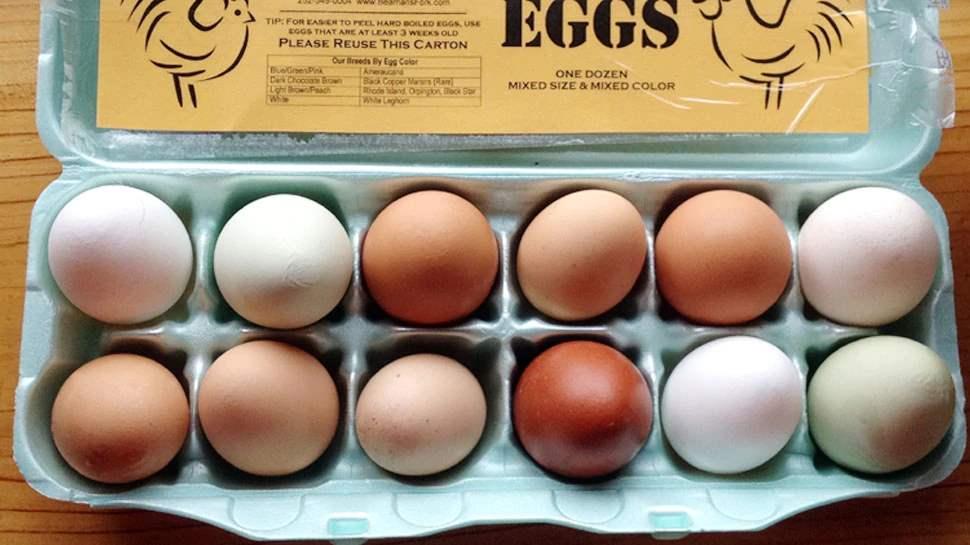 egg is good for brain