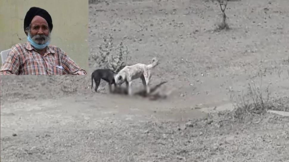 बुजुर्ग घर से थे लापता, अब मिली जली लाश, शव को नोच  रहे थे कुत्ते