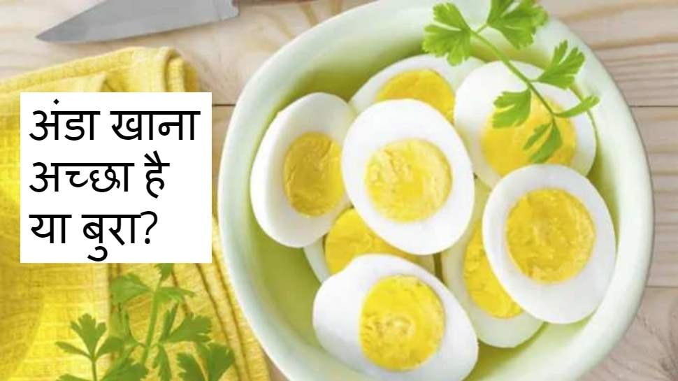 रोजाना अंडा खाने से बढ़ जाता है हृदय रोग और मौत का खतरा, जानें इस बारे में क्या कहती है नई रिसर्च