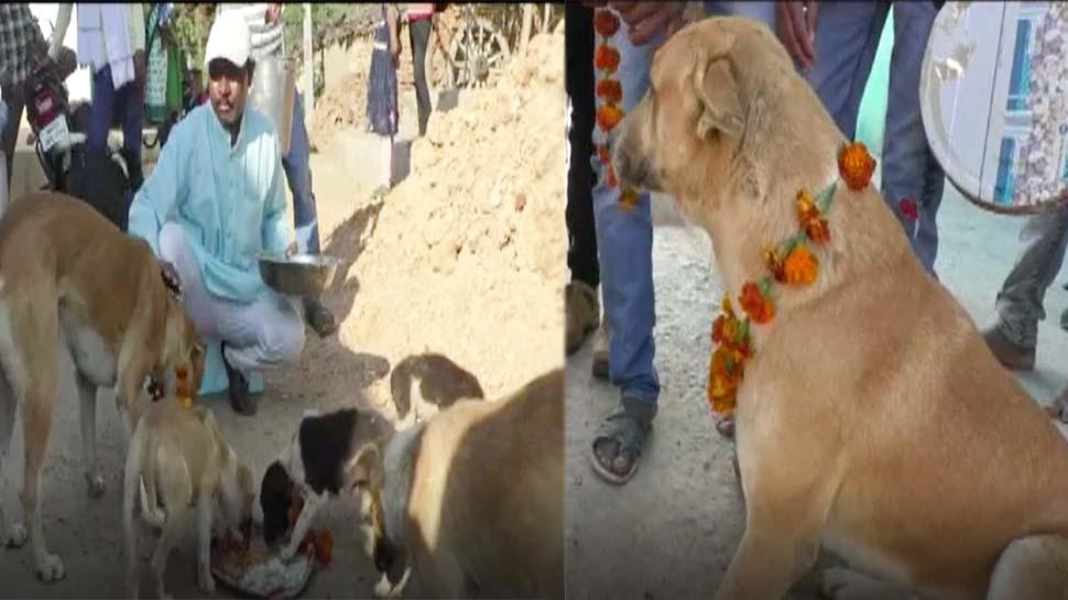 एक घटना ने किया इतना दुखी कि पूरे गांव के कुत्तों को दिया निमंत्रण और करवाया शाही भोज