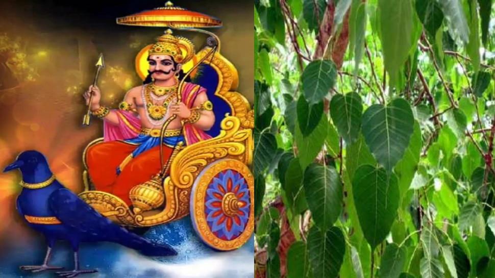 Shanidev को प्रसन्न करना है तो शनिवार को जरूर करें इस पेड़ की पूजा, हर दोष होगा दूर और मिलेगा शुभ फल