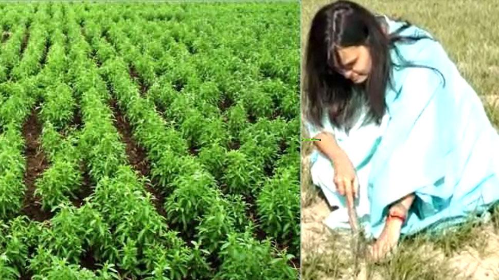 सिंगापुर में लाखों के पैकेज की नौकरी छोड़ लखीमपुर में खेती कर रहीं स्वाति, खड़ी कर दी खुद की कंपनी