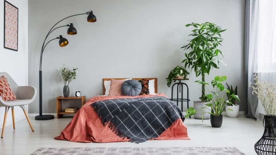 Health Tips: बेडरूम में जरूर रखें ये 5 प्लांट्स, बीमारियां रहेंगी कोसों दूर