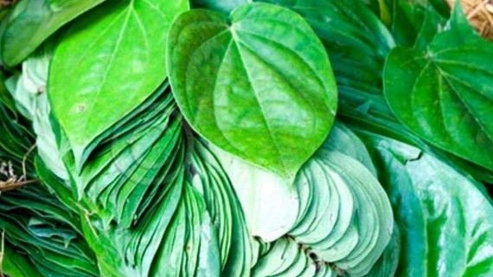 Do you know the benefits of betel leaves?  If not, you will be shocked to read this news