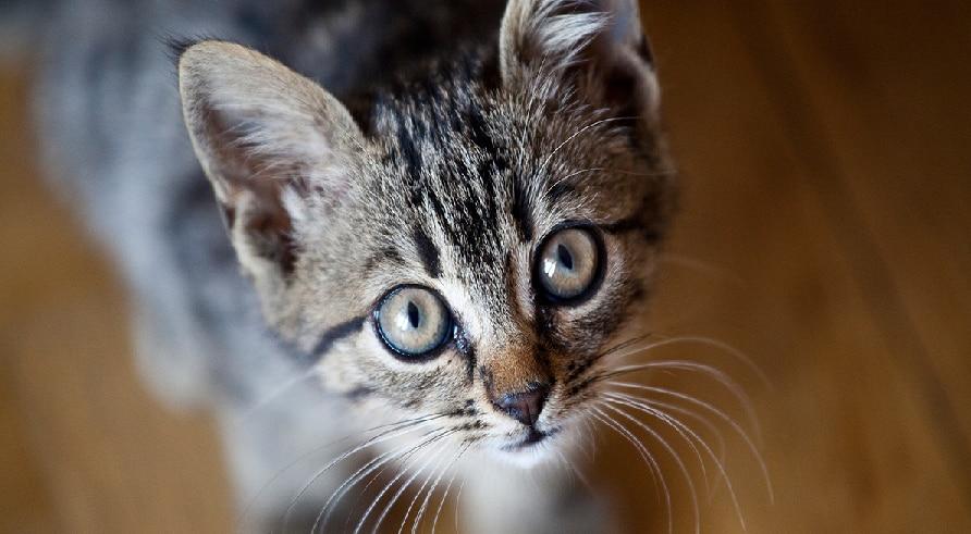 अगर घर में बिल्ली पालने जा रहे हैं, तो इन बातों का रखिए खास ख्याल