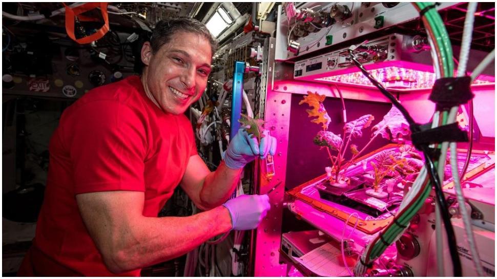 अब Space Station पर उगाई जाएंगी सब्जियां, Astronauts के लिए भेजे गए Pak Choi के पत्ते