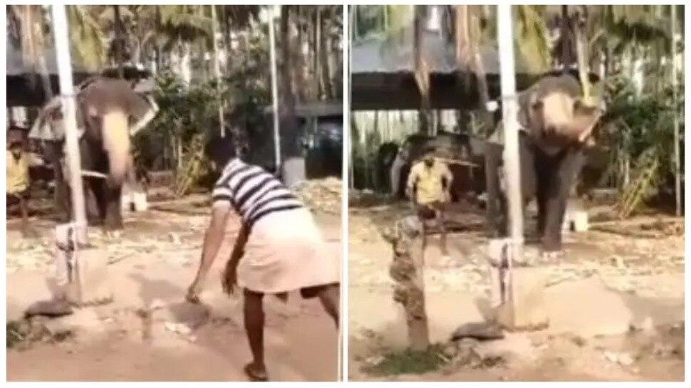 Viral Video: IPL बंद होने से न हों परेशान, देखिए 'गजराज' Elephant का Cricket खेलने का तरीका
