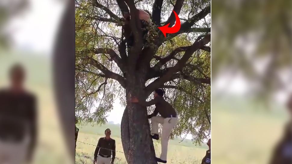 पेड़ पर चढ़े शख्स को पुलिस ने घेरकर दबोचा, Video जमकर हुआ वायरल