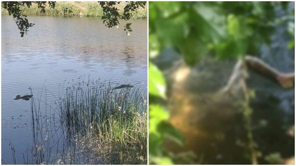 Exclusive: UP में गंगा के बाद अब पन्ना की रुंज नदी में उतराते दिखे शव, कोरोना संक्रमित होने के डर से हड़कंप
