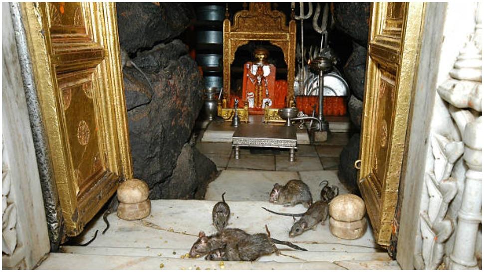 Karni Mata Significance In Rajasthan