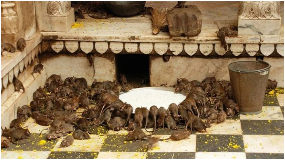 Temple Of Rats In India Mythology