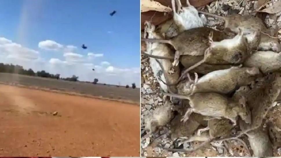 VIDEO: जब आसमान से होने लगी चूहों की बारिश! Corona के बीच ऑस्ट्रेलिया पर एक और महामारी का संकट