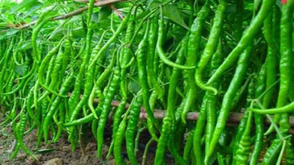 Health Benefits of green chillies Health news