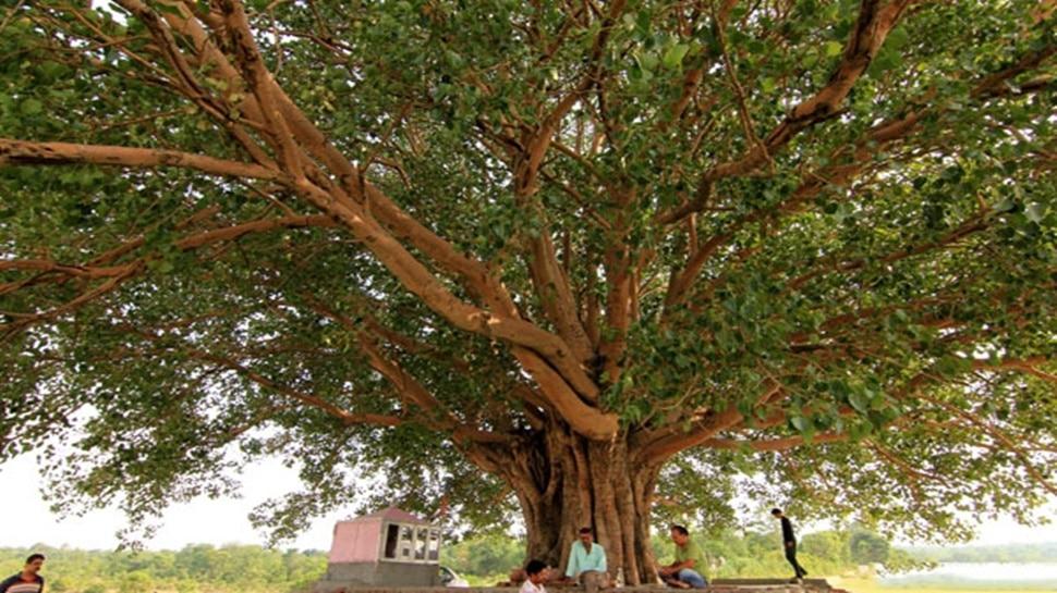 कोरोना से बचाव के लिए इस बुजुर्ग ने 15 दिनों से पेड़ पर ही जमाया डेरा, वजह जानेंगे तो आप भी करेंगे तारीफ