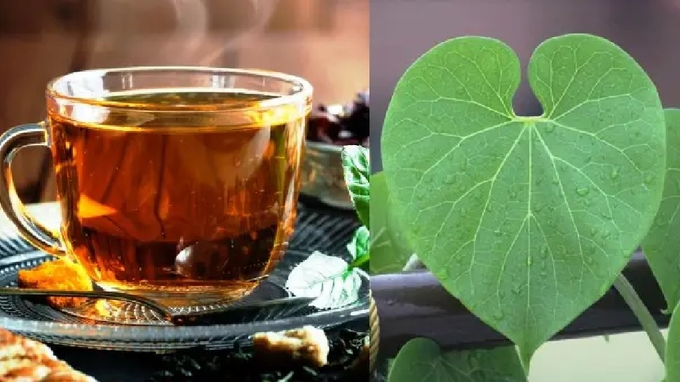 Prepare Giloy Brew Sitting at Home, Find Out How Much to Consume and 5 Miraculous Benefits