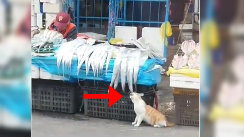 Video: बिल्ली ने चालाकी से दुकानदार को बनाया बेवकूफ, मछली को यूं कर डाला चट