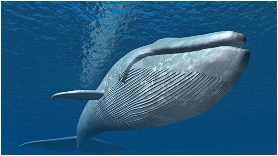 whale a sea animal