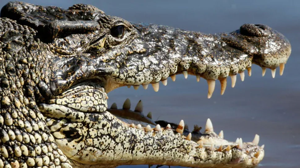 Crocodile की करोड़ों साल पुरानी विलुप्त प्रजाति पर सबसे बड़ा शोध, रिसर्च में चौंकाने वाला दावा