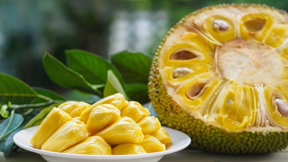 Benefits of jackfruit kathal ke fayde hindi me kathar ke fayde janiye brmp   बढ़ेगी इम्युनिटी और पाचन क्रिया भी होगी मजबूत, जानिए Immunity Booster कटहल के चमत्कारिक फायदे
