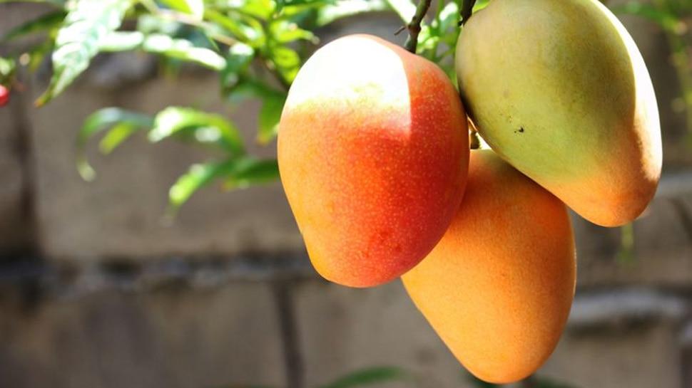 1 kg mango cost 3 lakhs