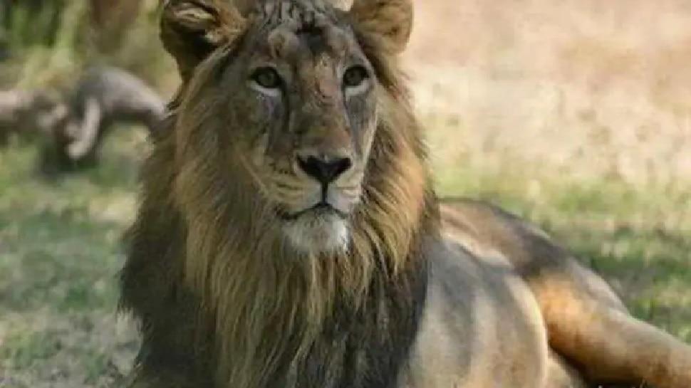 Tamil Nadu के जूलॉजिकल पार्क में 4 Lions में मिला Delta वेरिएंट, जीनोम सीक्वेंसिंग में हुई पुष्टि