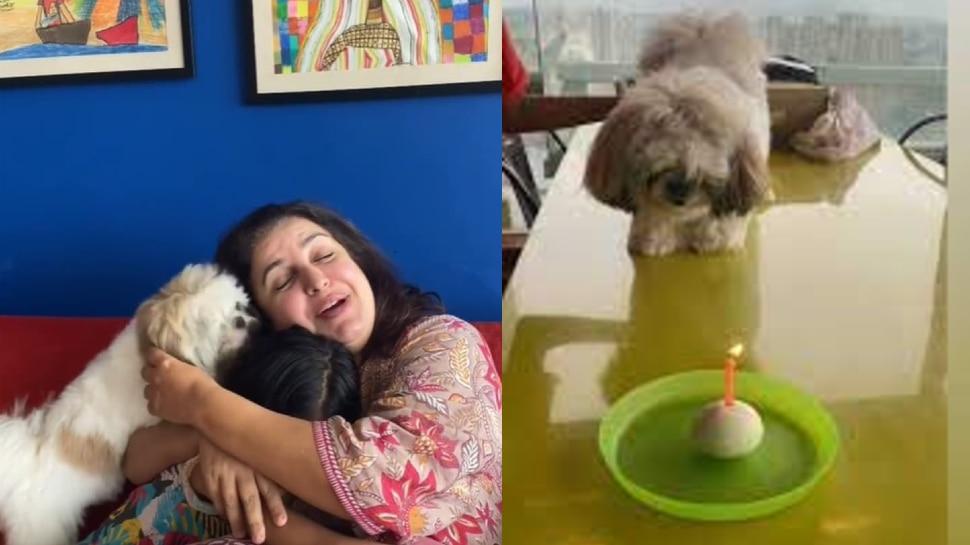 Farah Khan Celebrated her Pet Birthday, Video Gone Viral On Social Media |  Farah Khan celebrates her dog's birthday, your eyes will be stuck on the cake