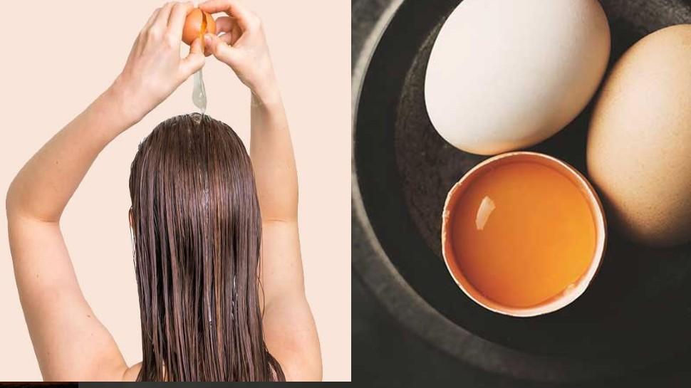 2 अंडे से बालों को मिलेगा नया जीवन, hair हो जाएंगे मुलायम और मजबूत, बस जान लीजिए उपयोग का तरीका
