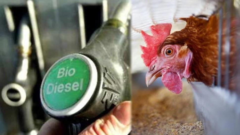 चौंकिए मत! मुर्गे से बनेगा Biodiesel, पशु डॉक्टर ने पेटेंट कराया तरीका