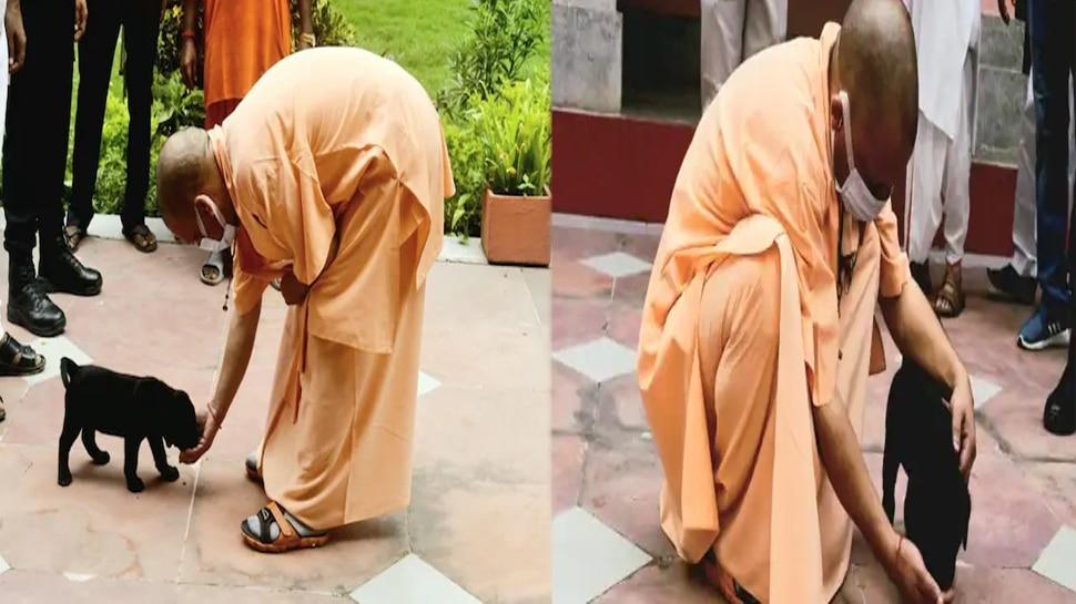 CM योगी को देखते ही दौड़ा चला आया 'गुल्लू', लिपट कर करने लगा अठखेलियां