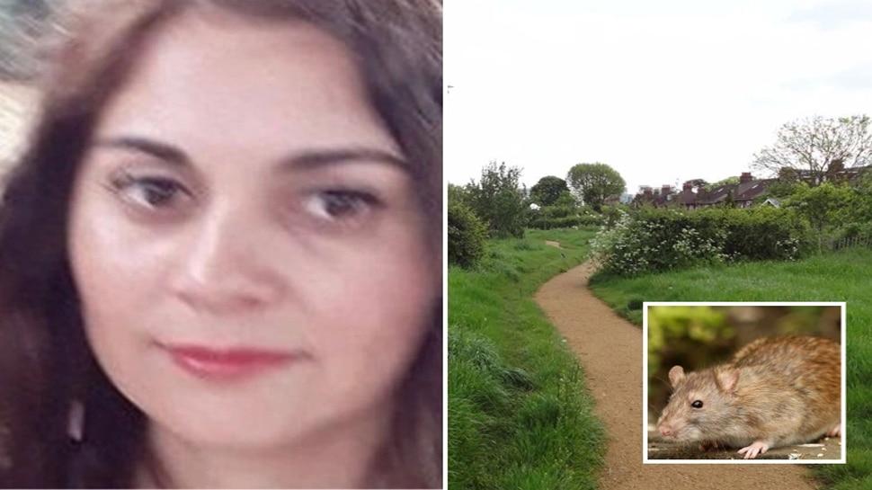 Park में टहल रही British Woman पर 100 से अधिक चूहों ने बोला हमला, कुतर दिए हाथ-पैर; दहशत में आए लोग