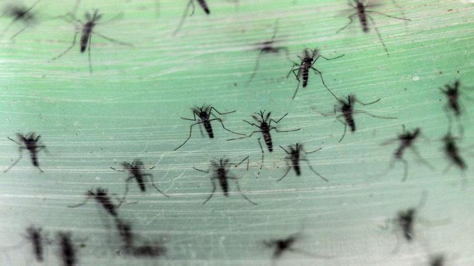 Maharashtra में मिला Zika Virus का पहला केस, 50 साल की महिला हुई संक्रमित