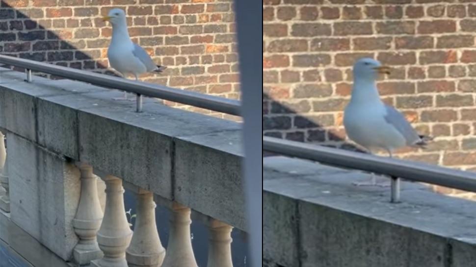 अचानक भौंकने लगी चिड़िया, Video देख आप भी कहेंगे- ऐसे कैसे हो सकता है?