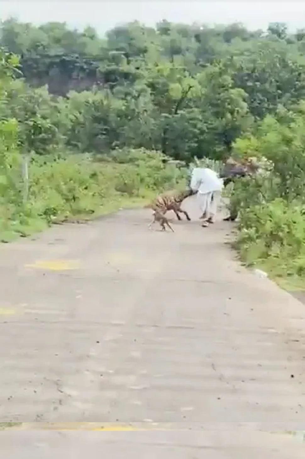 Hyena Attacks