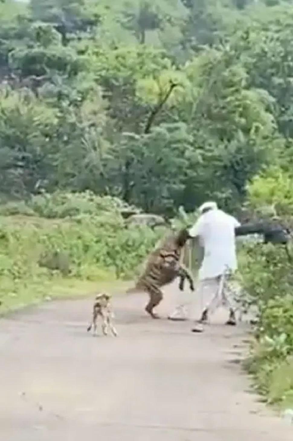 hyena found dead