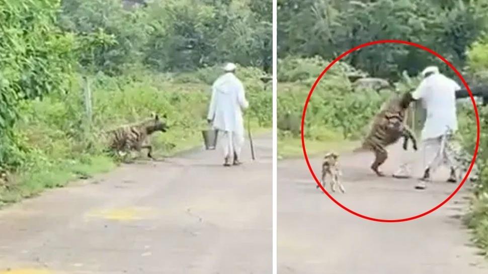 hyena was injured
