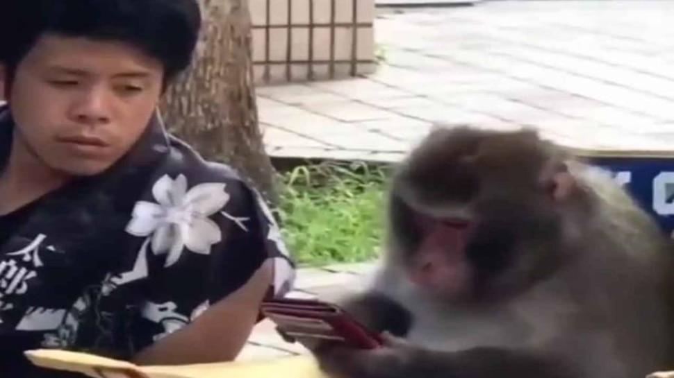 Funny Video: बंदर की फरमाइश के आगे झुका इंसान, खुद दे दिया अपना मोबाइल फोन